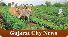 Gujarat City News