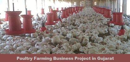 Poultry Farm in Gujarat - Poultry Farming Business Project in