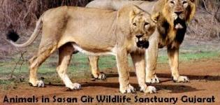 Animals in Sasan Gir Wildlife Sanctuary Gujarat - Timing Photos Images Rates
