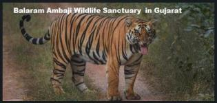Balaram Ambaji Wildlife Sanctuary in Gujarat