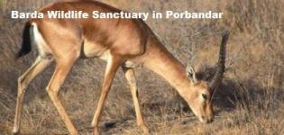 Barda Wildlife Sanctuary in Porbandar Gujarat - Information of Barda Hills Sanctuary