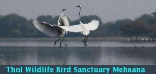 Thol Wildlife Bird Sanctuary Mehsana- Thol Wildlife Sanctuary Gujarat