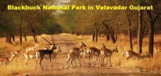 Blackbuck National Park in Velavadar Gujarat - Information of Black Buck Sanctuary
