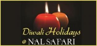 Diwali Holiday Celebration at Nal Safari near Ahmedabad