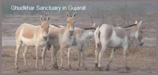 Ghudkhar Sanctuary in Gujarat - Ghudkhar Sanctuary Surendranagar