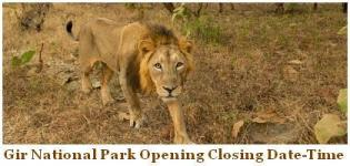 Gir National Park Opening Dates - Closing Time of Gir National Park