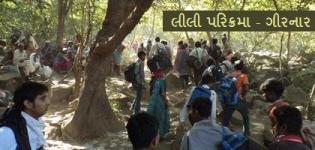 Girnar Lili Parikrama Junagadh Gujarat - Lili Parikrama Junagadh Live Photos