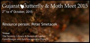 Gujarat Butterfly and Moth Meet at Koteshwar Gandhinagar from 2nd to 4th October 2015