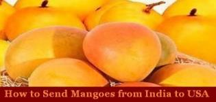 Send Mangoes to USA - How to Send Mangoes from India to USA