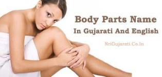 Human Body Parts Name with Picture in Gujarati to English - Male Female All Internal Part List