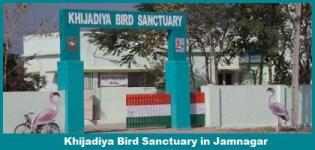 Khijadiya Bird Sanctuary & Marine National Park Jamnagar Gujarat - Address - Timings - Photos