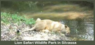 Lion Safari Wildlife Park in Silvassa Gujarat India - How to Reach Lion Safari Wildlife Park
