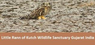 Little Rann of Kutch Wildlife Sanctuary Gujarat India