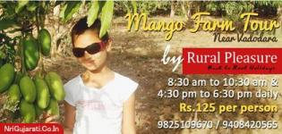 Mango Farm Tour near Vadodara by RURAL PLEASURE Team - Superb Village Farming Enjoyment