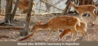 Mount Abu Wildlife Sanctuary in Rajasthan India - Timings Information of Wildlife Sanctuary