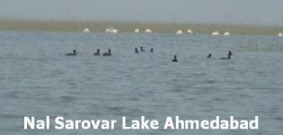 Nalsarovar Lake Ahmedabad - Nal Sarovar Lake Bird Sanctuary Ahmedabad Gujarat