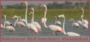 Nal Sarovar Bird Sanctuary Ahmedabad - Where is Nal Sarovar Bird Sanctuary Gujarat