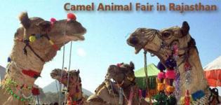 Pushkar Camel Mela Dates 2014 - Pushkar Fair Program Schedule 2014 at Ajmer Rajasthan India