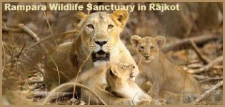 Rampara Wildlife Sanctuary in Rajkot Gujarat - Information - Address - Photos
