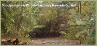 Shoolpaneshwar Wildlife Sanctuary Narmada Gujarat India - Information Location Photos