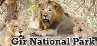 Travel and Discover Gir Forest National Park Junagadh - 16th October to 15th June