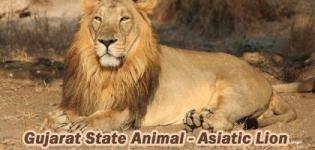 Which is State Animal of Gujarat India - Asiatic Lion Photos - Indian Lion Information