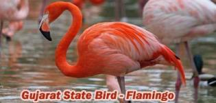 Which is State Bird of Gujarat India - Greater Flamingo Bird Photos - Types of Flamingo