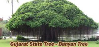 Which is State Tree of Gujarat India - Banyan (Vadlo) Tree Photos - Types of Banyan Tree