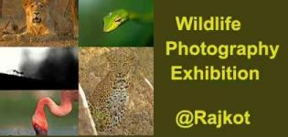 Wildlife Photography Exhibition 2017 in Rajkot at Shyama Prasad Mukherji Art Gallery