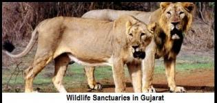 List of Wildlife Sanctuaries in Gujarat India - Full Information with All Names and Numbers