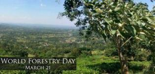 World Forest Day Date in India - When is World Forestry Day Celebrated Every Year