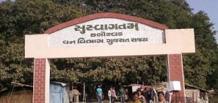 Kabirvad Bharuch Gujarat India - Kabirvad Banyan Tree Distance from Ahmedabad Bharuch Baroda