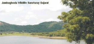Jambughoda Wildlife Sanctuary Vadodara Gujarat - Jambughoda Forest Gujarat