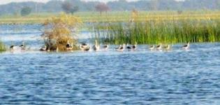 Vadhvana Lake Dabhoi - Wadhwana Bird Sanctuary