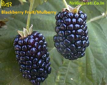 Fruits Name in Gujarati to English with Photos - List of All